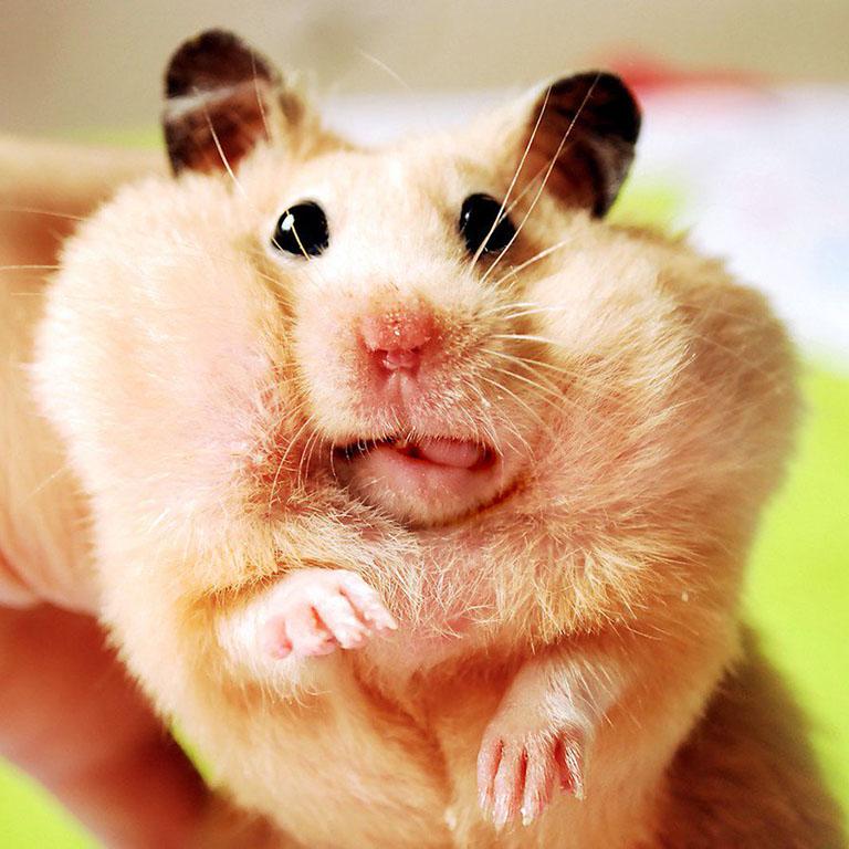 Penya - Hamster of ZDM-auto